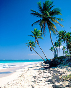 palm trees and white sand
